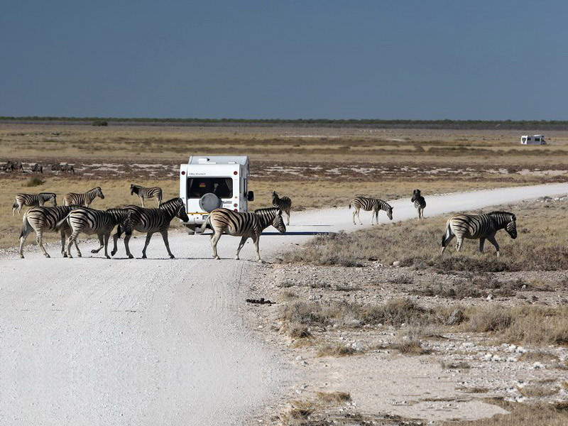 Campers and Motorhomes For Sale. Sight seeing in game reserves done the right way